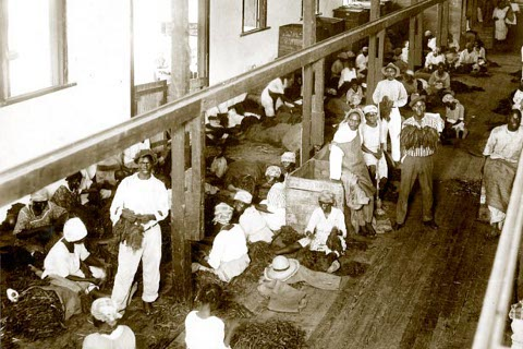 Tobacco workers in a factory